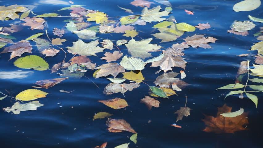 Опавшая листва с деревьев в чаше бассейна
