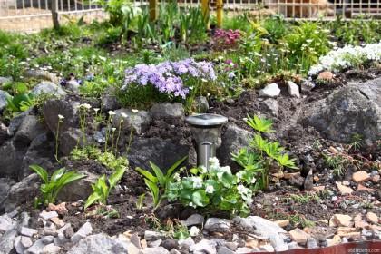 почва для альпийской горки