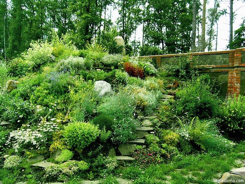 лиственные формы кустарников и деревьев для альпийской горки