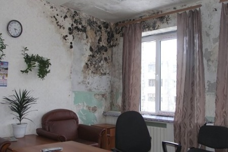 грибок на стене из-за сырости