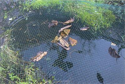 сетка над прудом