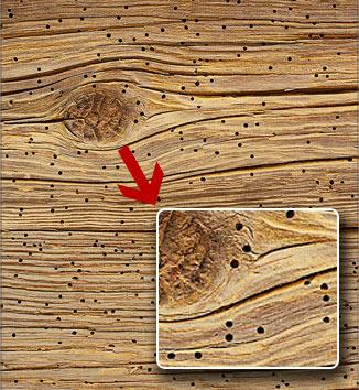поврежденная древесина