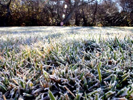 Газон зимой