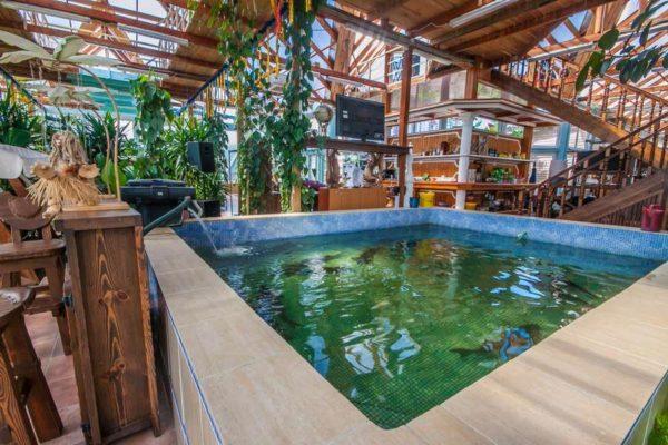 оранжерея с бассейном