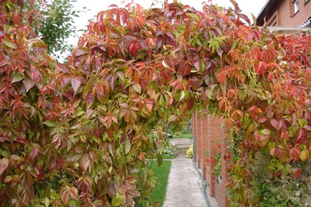 Цветение листвы весной