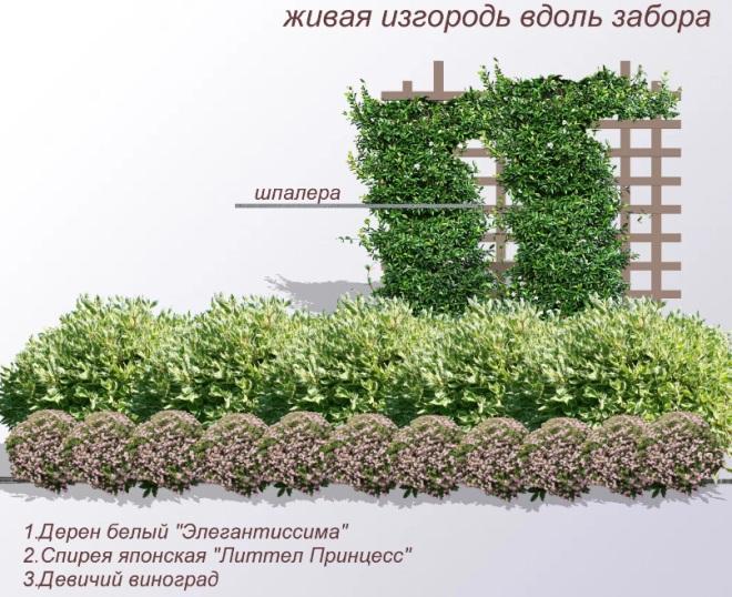 Комбинирование живой изгороди