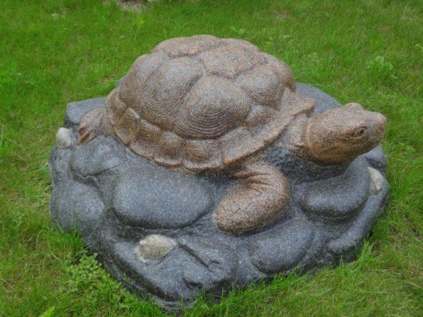 черепаха декоративная