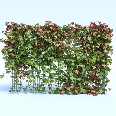 Забор для растений