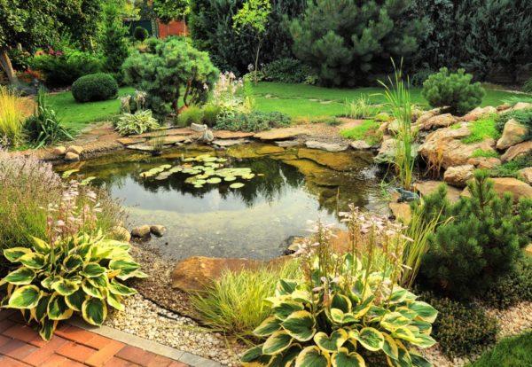 пруд с растениями