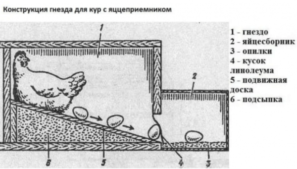 пример с яйцеприемником