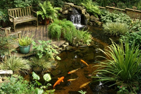 рыбы в водоеме