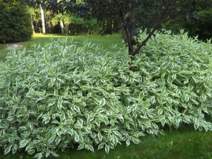https://www.botanichka.ru/wp-content/uploads/2019/06/izgorodi-v-poluteni-01.jpg