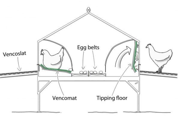 вариант с яйцесборником