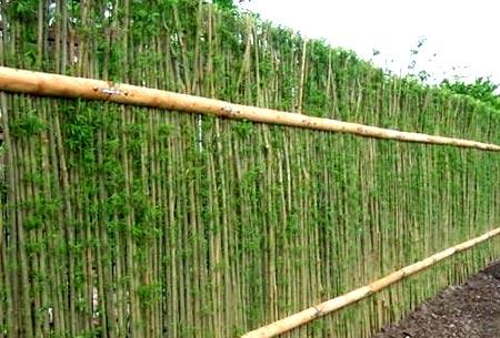 ива плетенный забор