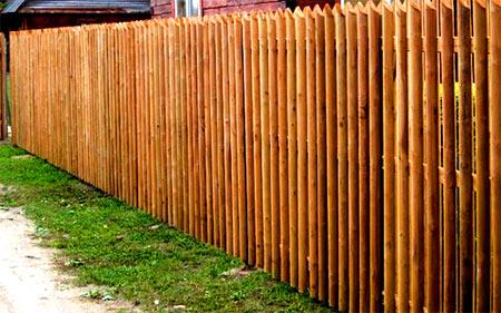березовые карандаши забор