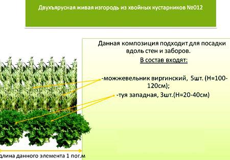 комбинированная живая изгородь