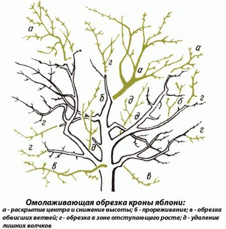 Схема подрезки дерева