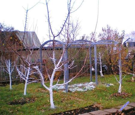 деревья и кусты на дачном участке весной