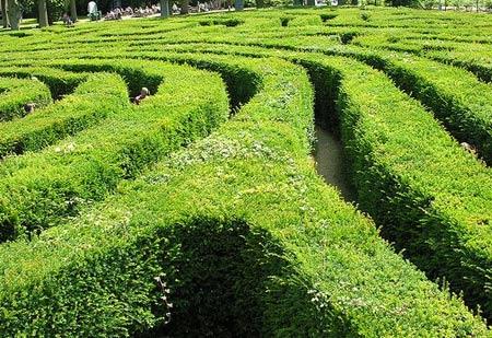 зеленый лабиринт на участке