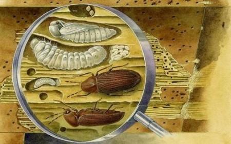 насекомые в деревянном доме