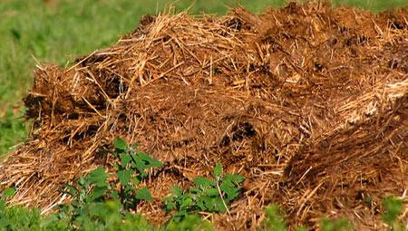 удобрения из коровьего помета