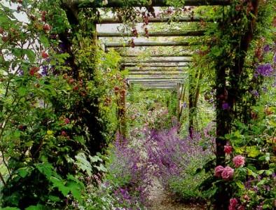 пергола, увитая растениями