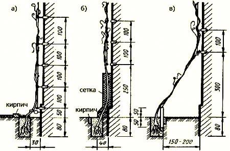 схема посадки лиан