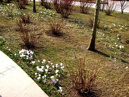 газон после зимы