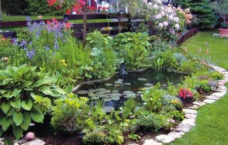 пруд на даче с растениями
