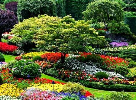 растения на участке
