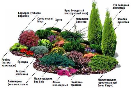 растения для горки