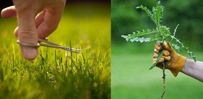удаление сорняков с газона