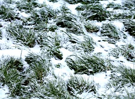 трава укрывает землю
