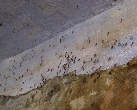 комары в подвале