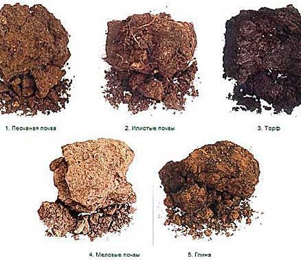 почвы разных видов