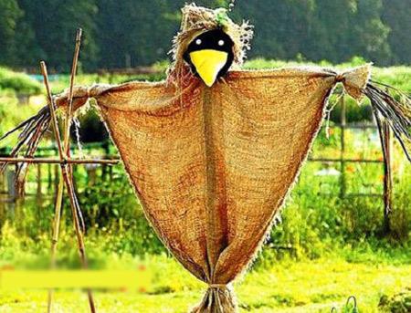 пугало ворона