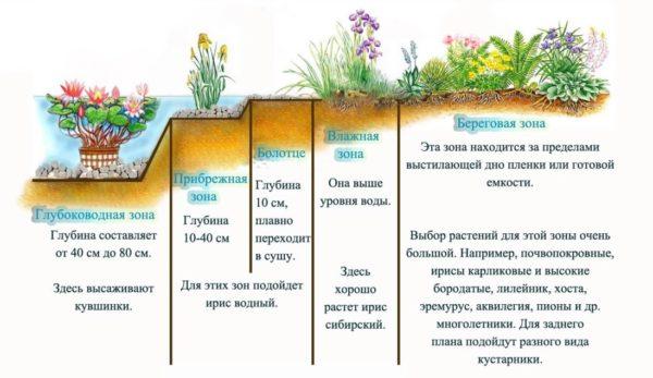 глубина высадки растений