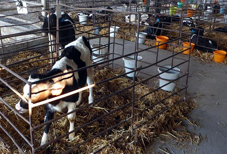 ограда для животных
